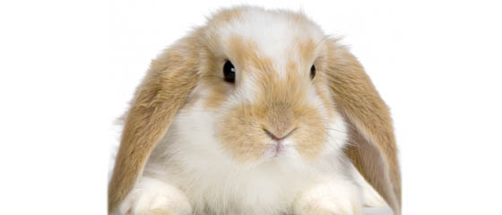 Pet Lodge USA - Bunny
