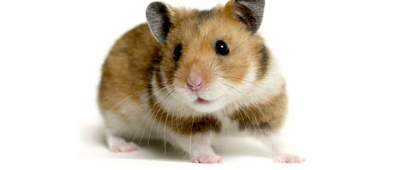 Pet Lodge USA - Hamster